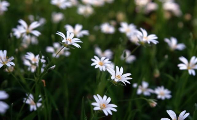 уход + время + любовь = чудесный газон!