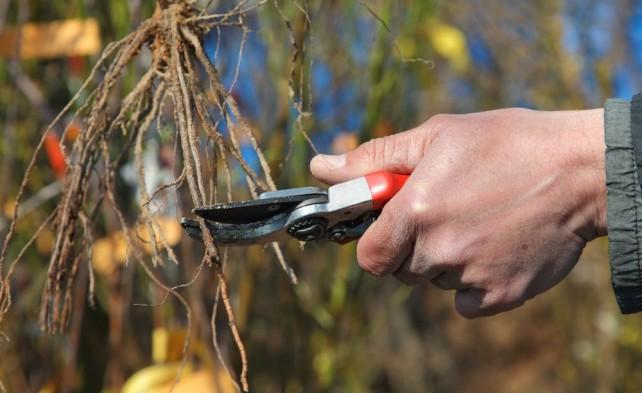 открываем капилляры растения