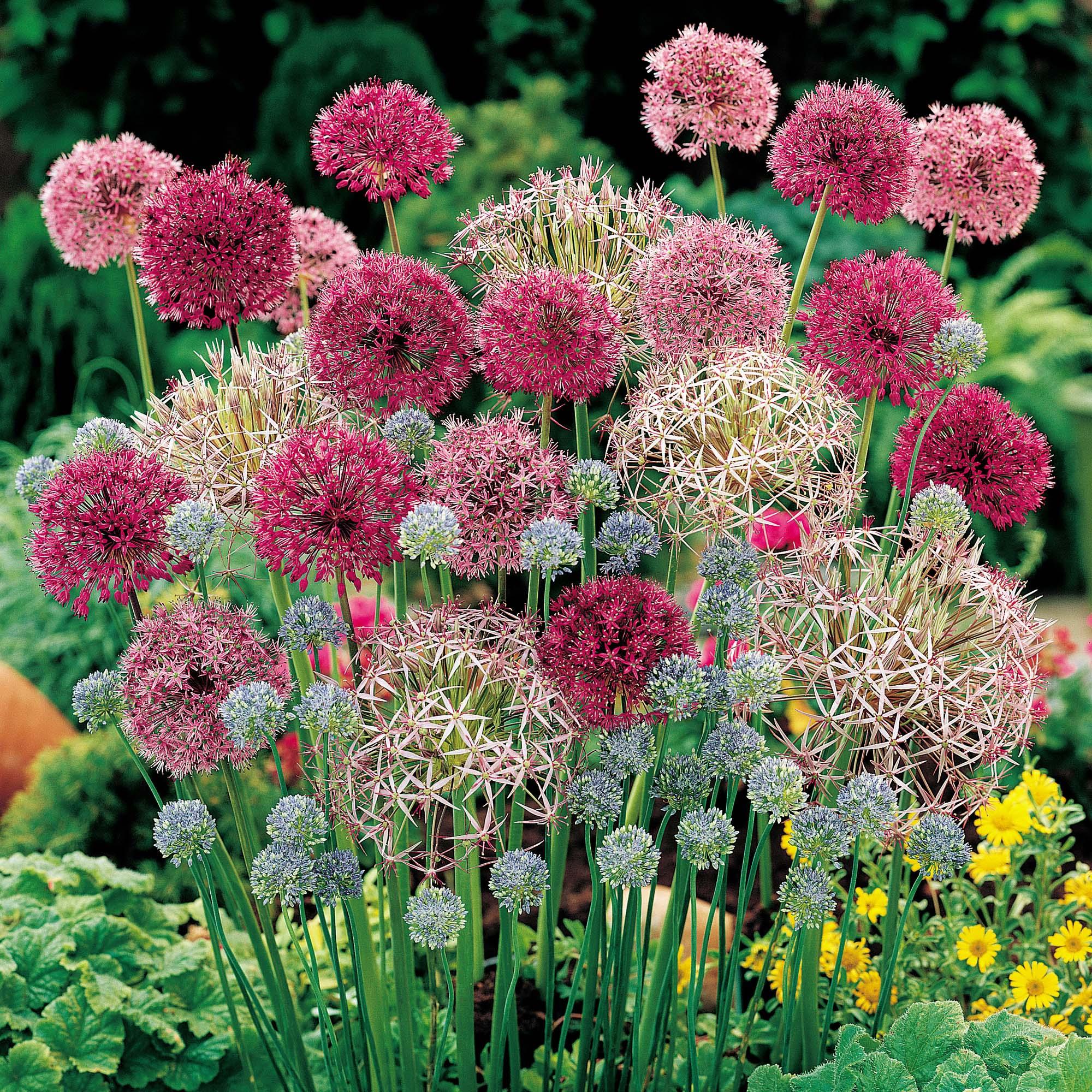 Декоративный лук популярные разновидности и нюансы выращивания