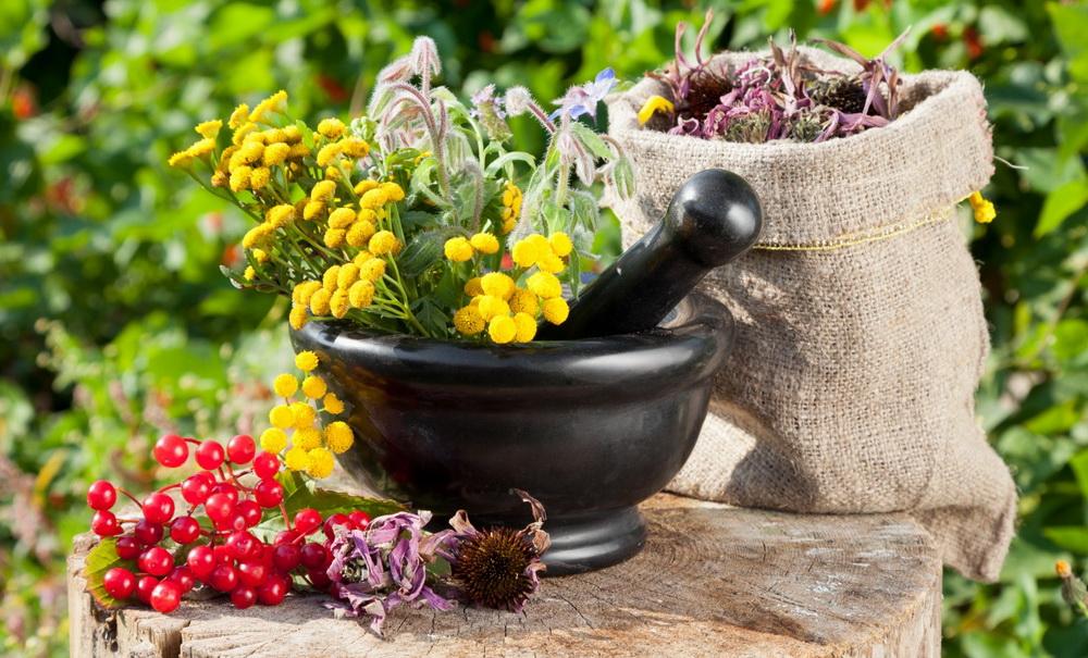 Как создать арома-клумбу из лекартвенных трав?