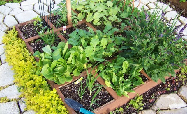 планировка декоративного огорода