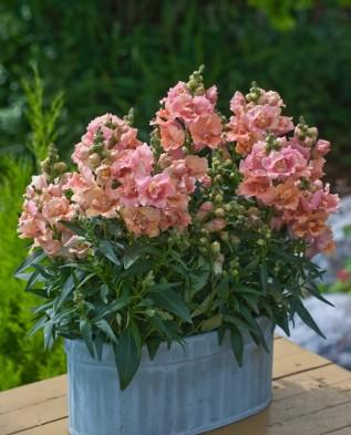 Цветы в корзине как клумба