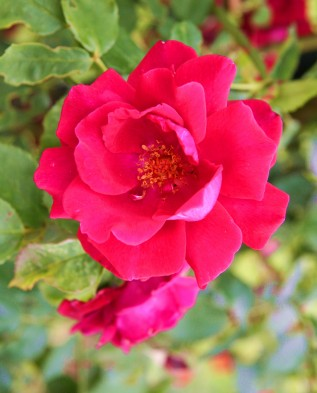Red Parfum (Ред парфюм)