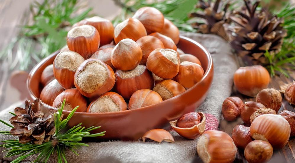 Выращивание фундука (лещины) в домашних условиях из ореха