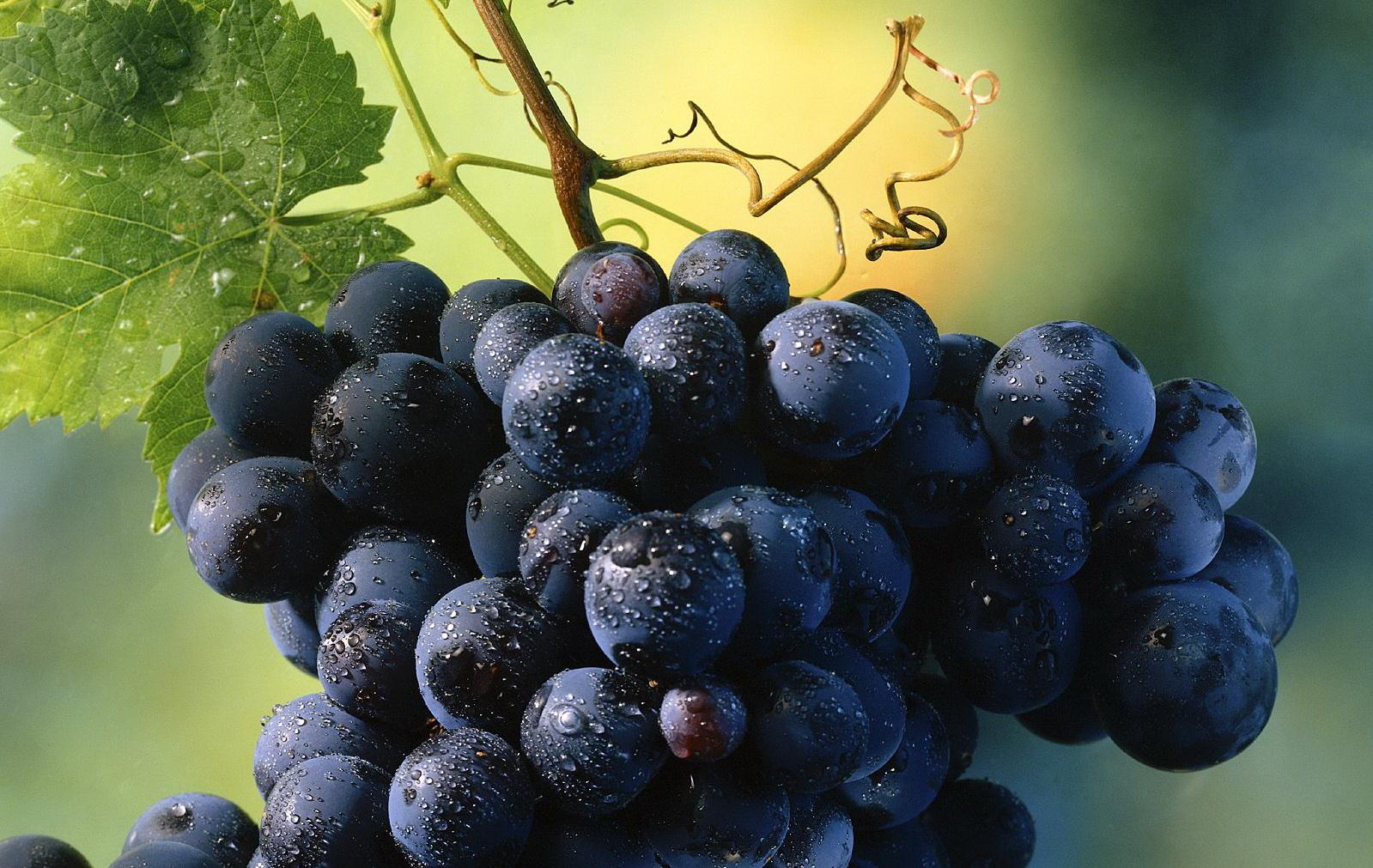 как раз виноград красивые картинки создания ролика нужно