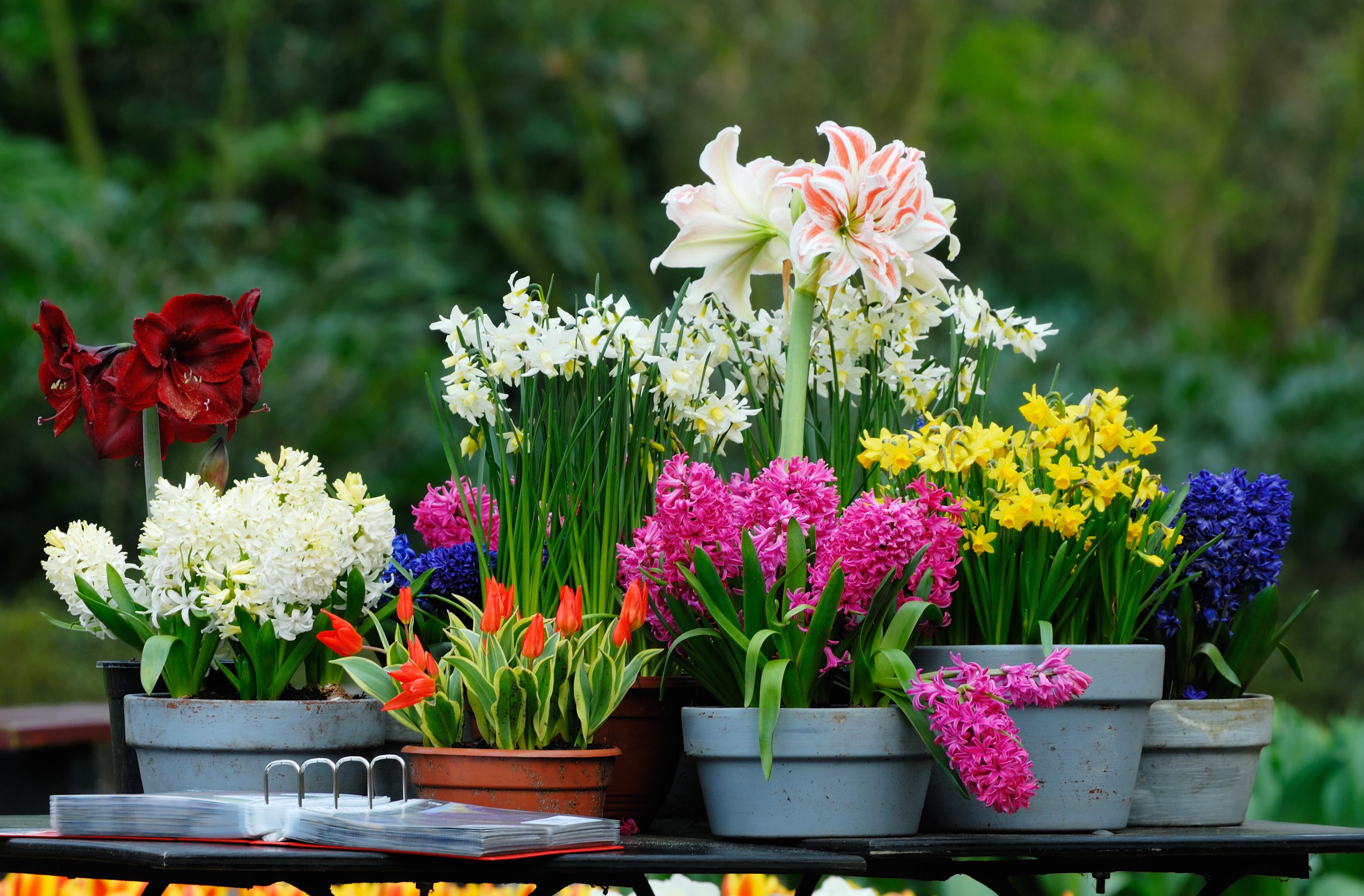 Что такое нематоды для цветов