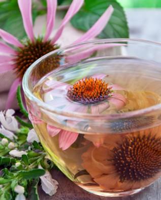 эхинацея пурпурная чай инструкция по применению