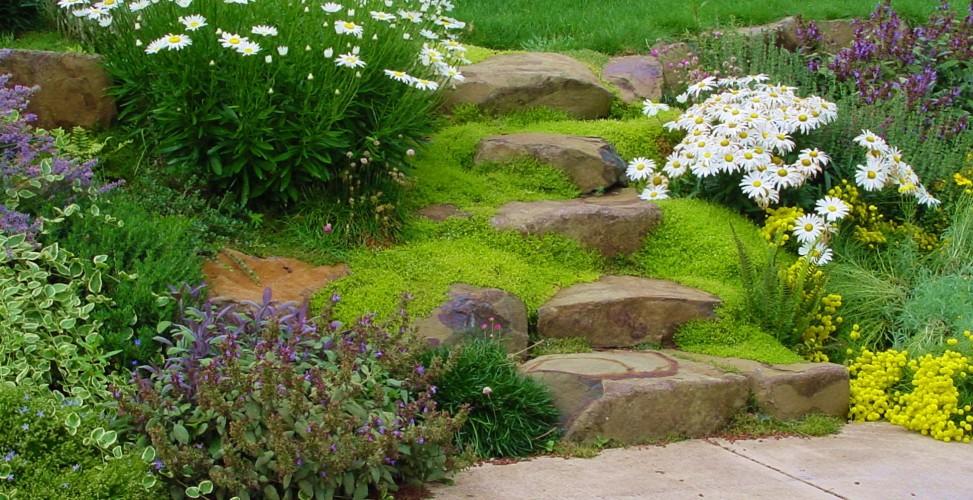 Как сажать почвопокровные цветы 46