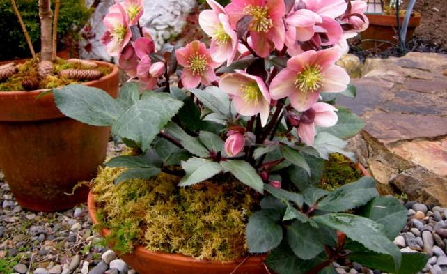 Как до весны сохранить в домашних условиях