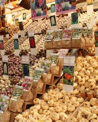 рынок луковиц в Голландии