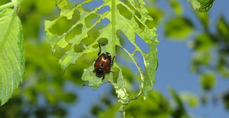 Картинки по запросу инсектициды