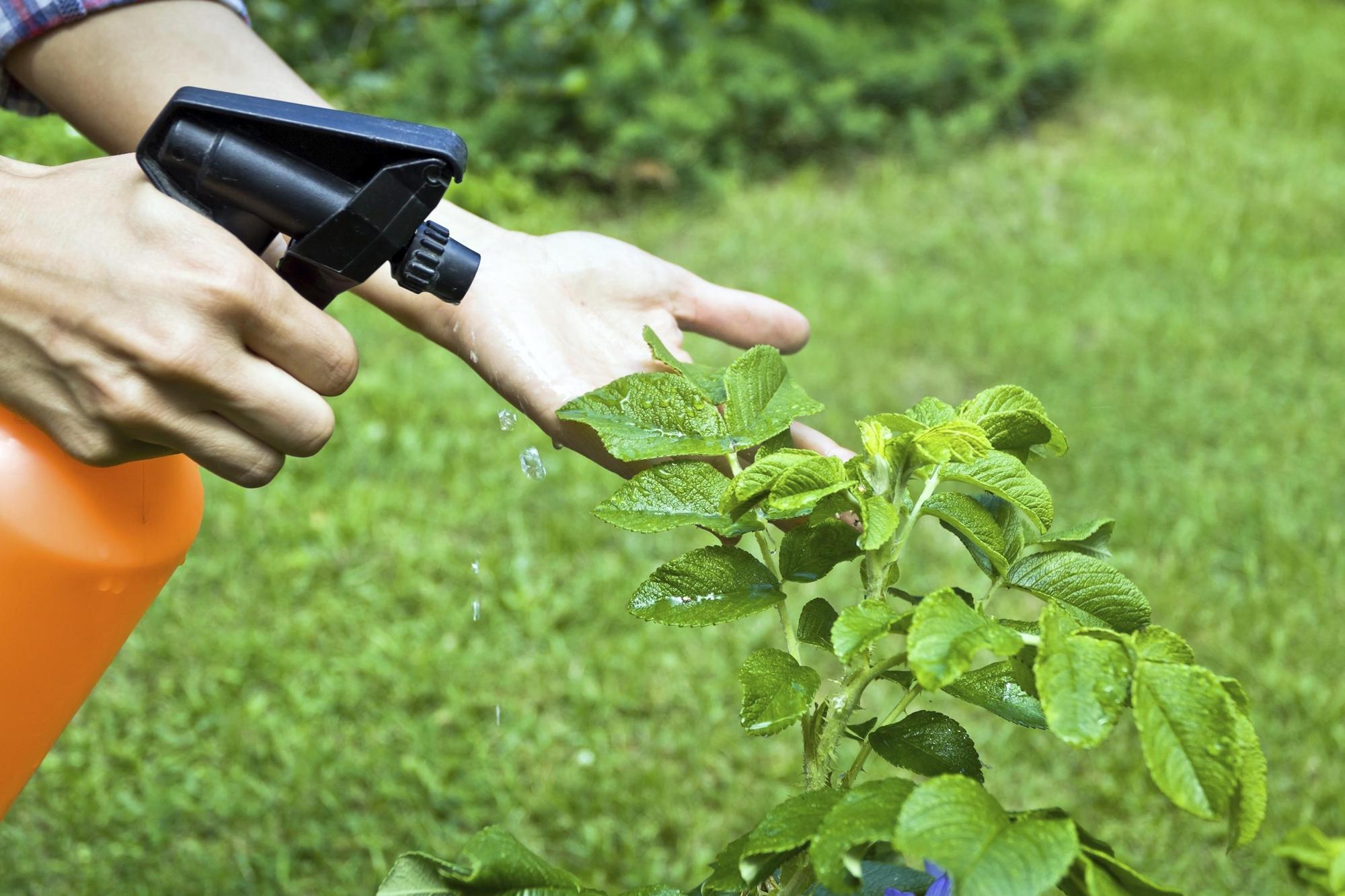 Грибковые болезни комнатных растений – лечение и симптомы, причины заболевания цветов.