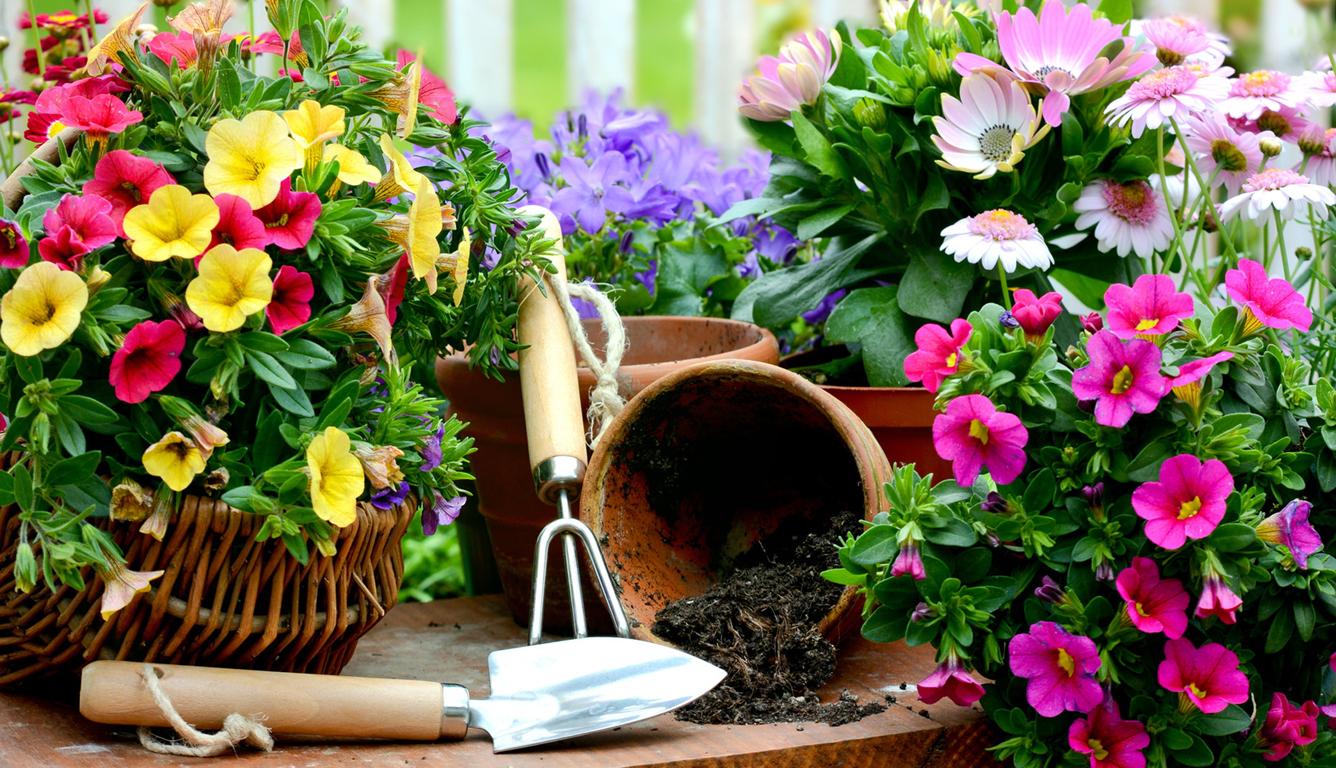 Какие цветы сажать в горшках на улице на всё лето