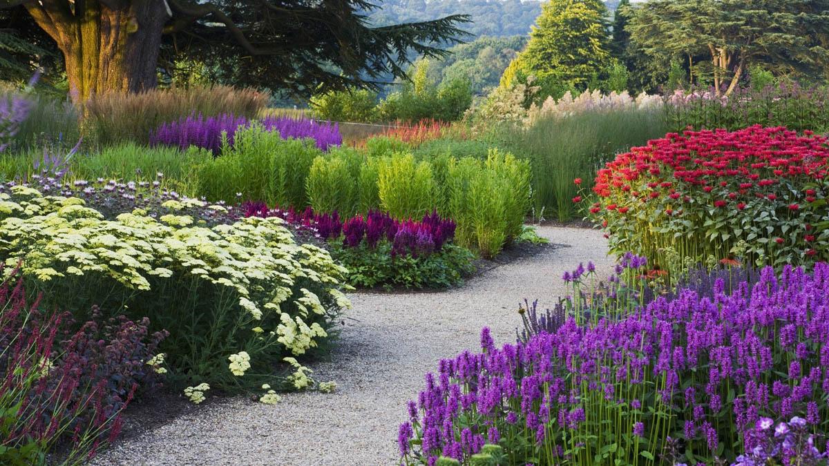 Цветы для сада и огорода многолетники высокие