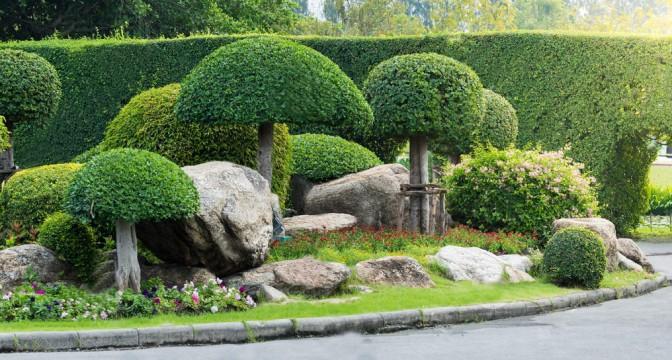 Где применить декоративные деревья на даче