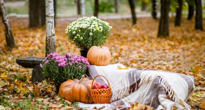 На заметку садоводу в октябре!