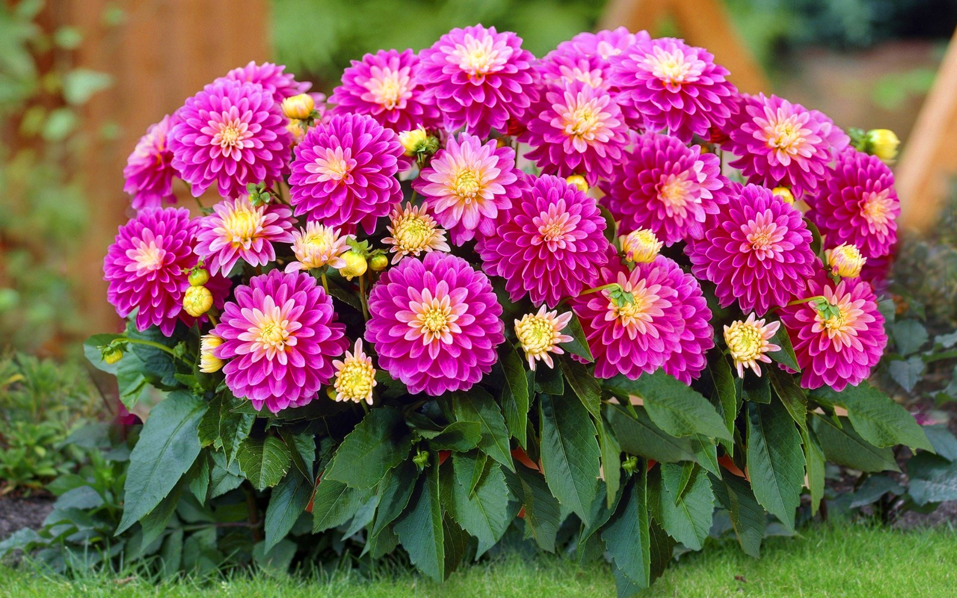 Название и фото низкорослых цветов