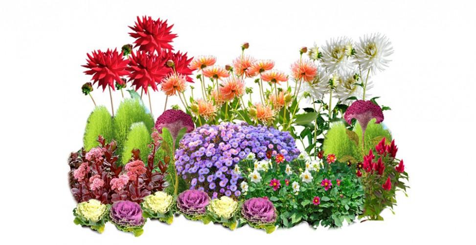 Клумба с осенними цветами картинки для детей