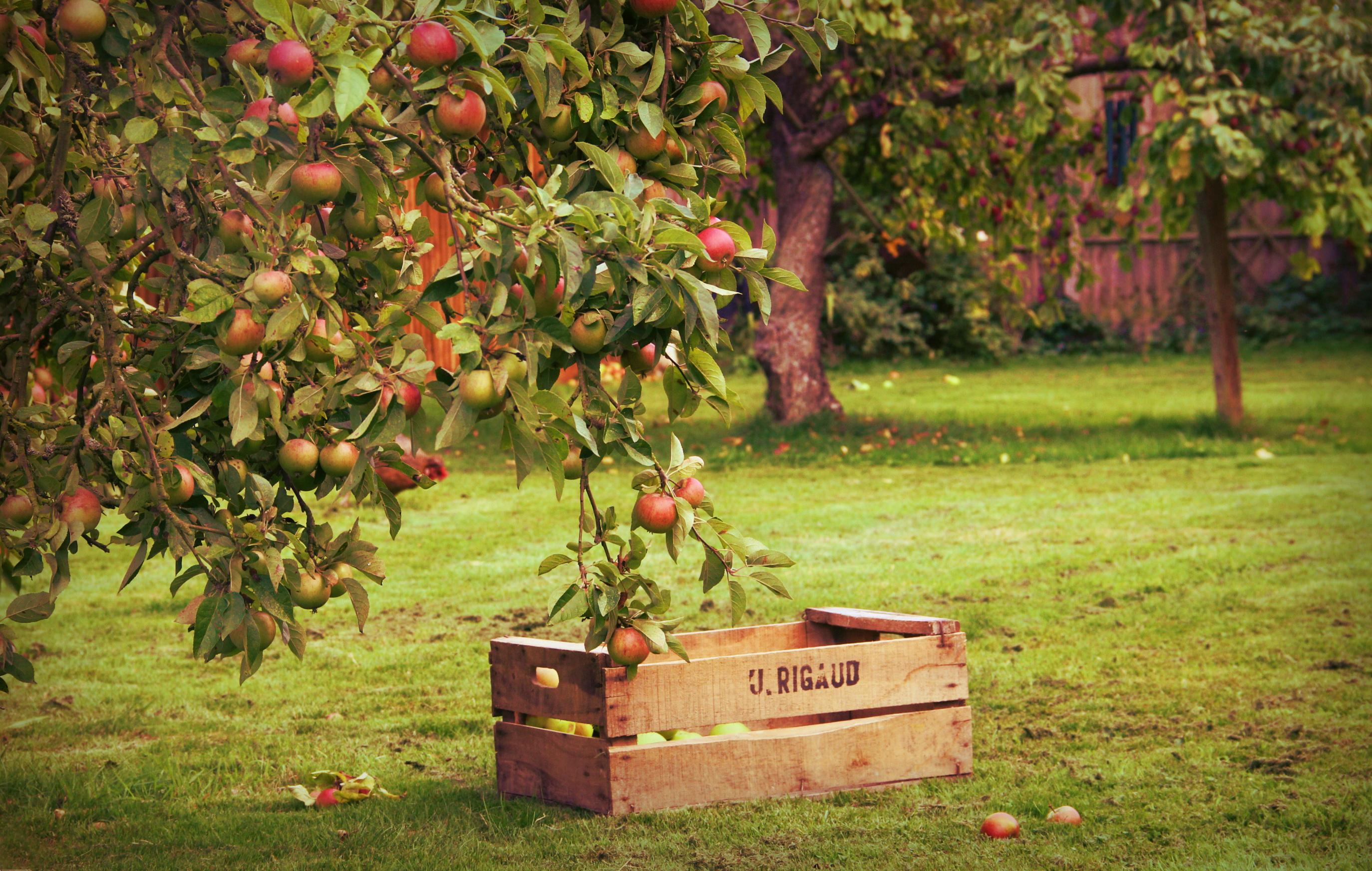 картинки сад с яблонями январский самый первый