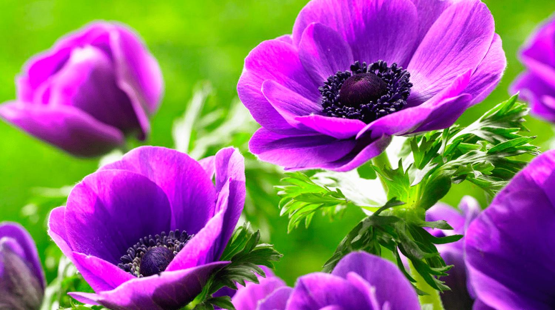 Открытки садовых цветов, для
