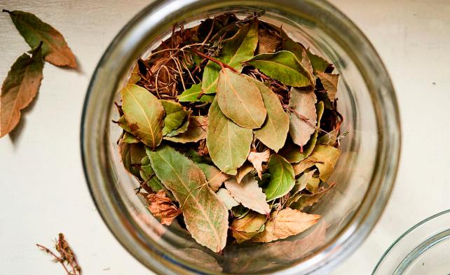 Сушеные листья лавра